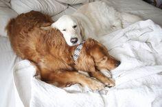 Peru! Da man nicht reisen kann, holen wir die wunderbaren Länder zu uns ...  Handgemachte schöne & aussergewöhnliche Peruvian-Kollektion. Bei MIKKIS immer als Set erhältlich (Leine und Halsband).  #dog #instadog #hundeliebe #dogstagram #doglover #dogphotography #puppy #hundefotografie #dogs #hundträning   #health Labrador Retriever, Dogs, Peru, Animals, Colour Pattern, Leather, Nice Asses, Products, Viajes
