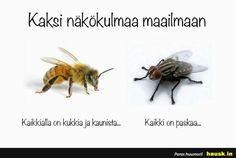 Kaksi näkökulmaa - Two ways to view the world: There are flowers everywhere and it's so beatiful OR what the fly thinks? Poem Quotes, Best Quotes, Funny Drawings, Clever Quotes, In My Feelings, Cat Memes, Food For Thought, No Time For Me, Cool Words