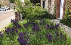 Landscape Design, Garden Design, Garden Architecture, Terrace Garden, Ornamental Grasses, Salvia, Blue Tones, Front Yard Landscaping, Green Grass