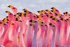 Flamingos Partying #pink