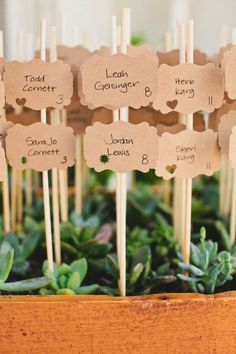 escort cards on skewers in succulent displays // photo by HelloStudioBlog.com