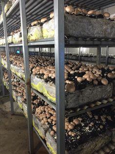 Margin's Mushrooms - Central Coast Mushroom Farm and Supplier
