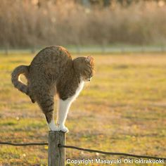 Stretch - #Cats