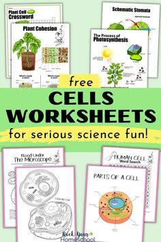 Easily boost science fun with these FREE science printable activities! These 15 cells worksheets (human and plant) are awesome science printables for getting more out of lessons and experiments. Find out more and get your FREE set today! Science Activities For Kids, Science Worksheets, Worksheets For Kids, Science Fun, Life Science, Teaching Cells, Biology For Kids, Science Cells, Cells Activity