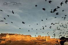 Jaipur - Rajasthan, India | Cosmin Danila Photography - I See Beautiful People The foundations of Amber fort were laid in 1592 by Raja Man Singh and it took about 137 years to be completed.