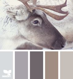 Reindeer Tones - neutral living room palette