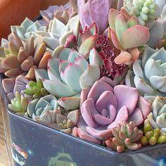 amante a los cactus,amo la música,la piiizza uff.