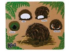 Kiwi life cycle Life Cycles, Kiwi, Character Art, Puzzle, Toys, Activity Toys, Puzzles, Clearance Toys, Gaming