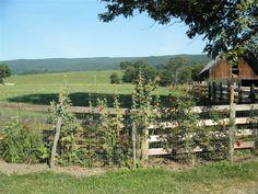 Virginia home...hollyhocks by pasture fence