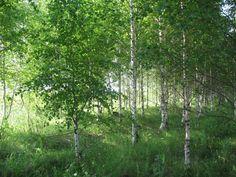 Природа России  #Russia  #Nature