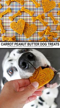 DIY Dog Treat Recipes - Carrot and Peanut Butter Dog Treats | These special doggy cookies get their gorgeous golden glow (and a boost of fibre and vitamins) from yummy carrot. In addition to being doggone delicious, this treat recipe is vegetarian/vegan friendly too! #DogsInWeddingsLabs Diy Dog Treats, Homemade Dog Treats, Healthy Dog Treats, Dog Biscuit Recipes, Dog Treat Recipes, Dog Food Recipes, Vegetarian Dog Food Recipe, Carrots And Peanut Butter, Peanut Butter Dog Treats