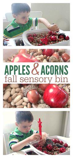 Great fall sensory bin - Apple , farm, and fall themed sensory play for preschool.