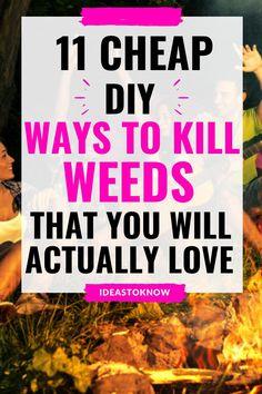 Garden Weeds, Garden Plants, Garden Tips, Garden Projects, Kill Weeds Naturally, Killing Weeds, Outside Lands, Poisonous Plants, Gardening Hacks