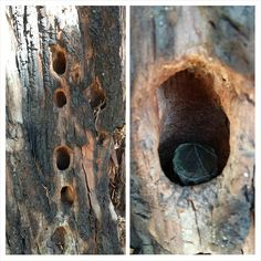 Some spots are just meant to hide a #geocache.  (pinned from websta by IBGeo - pinterest.com/islandbuttons)
