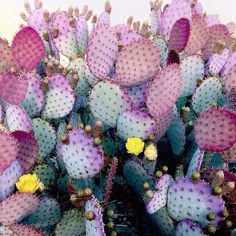 We can plant Cactus on the Garden, we can put it on indoor or outdoor area, or we can put cactus plant on the small area and make it more unique and stunning. Check our collections about Cactus Gar… Cactus Plante, Plants Are Friends, Cactus Y Suculentas, Cactus Flower, Cacti And Succulents, Color Inspiration, Writing Inspiration, House Plants, Planting Flowers
