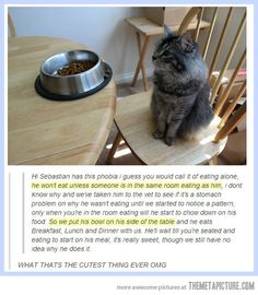 Cute cat enjoys family dinners