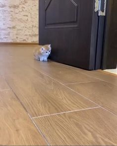Wanted To Surprise But Got Surprised Cute Kittens, Cute Baby Cats, Funny Cute Cats, Cute Funny Animals, Cute Dogs, Cute Animal Memes, Baby Dogs, Cute Puppies, Cute Babies