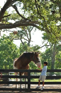 Horses, Hilton Head Island, SC.... Lawton stables. Sea Pines Plantation