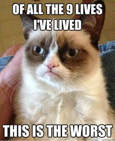 GRUMPY CAT! Best Memes (7 IMAGES)
