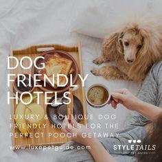 Best dog friendly hotels uk