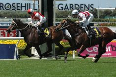 Target In Sight (AUS) 2009 Dkb.g. (Nadeem (AUS)-Xaaranthe (AUS) by Xaar (GB) 1st ATC Maurice McCarten (AUS-G3,1100mT,Rosehill) (photo: Racing and Sports)