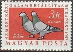 two 1957 Hungarian stamps released for a pigeon exhibition in Budapest Stamp Collecting, Postage Stamps, Budapest, Pigeon, Gallery, Animals, Europe, Album, Design