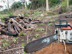 Brasil ganha reforço de R$ 420 milhões para combate ao desmatamento