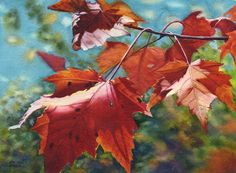 Red maple leaves, watercolour original painting by Cathy Hillegas.