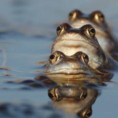 ^Frog  <3