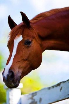 """""""He's of the colour of the nutmeg. And of the heat of the ginger.... he is pure air and fire; and the dull elements of earth and water never appear in him, but only in patient stillness while his rider mounts him; he is indeed a horse, and all other jades you may call beasts. """"William Shakespeare, Henry V"""