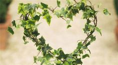 How to make an Ivy heart - simple and effective! (incase th elink doesnt work)   http://www.gardenersworld.com/how-to/projects/creative-projects/how-to-make-an-ivy-heart/171.html