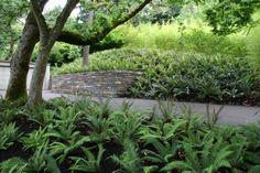 3b628bca921d mass planting of sword ferns. Design and install by Mosaic Gardens