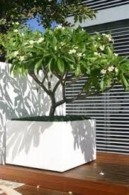 Image result for planter in courtyard garden