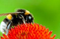 Keeping the peace between beekeepers and their urban neighbors