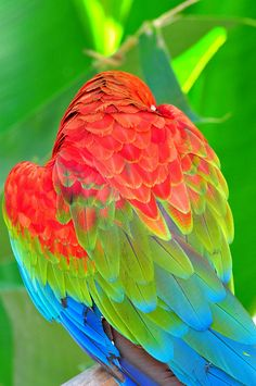 beautiful colorful parrot~ Tropical