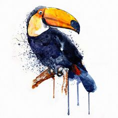 Toucan Watercolor painting Wildlife Wall art by Artsyndrome