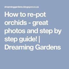 How to re-pot orchids - great photos and step by step guide! Orchid Care, Dream Garden, Outdoor Fun, Step Guide, Great Photos, Planting Flowers, Flower Plants, Potted Plants, Houseplants