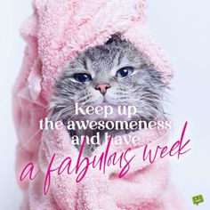 Funny have a blessed week image with cat to start the week the right way. Happy Monday Images, Happy Monday Quotes, Monday Morning Quotes, Good Monday Morning, Cute Good Morning Quotes, Morning Greetings Quotes, Good Morning Messages, Good Morning Wishes, Good Morning Images