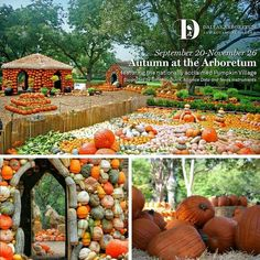 Pumpkin Village, Dallas Arboretum