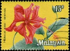 Hibiscus rosa-sinensis.  Federal Malay States, circa 1979