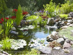 Perfect back yard oasis