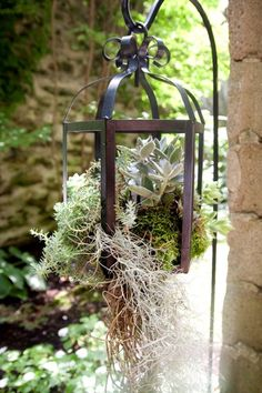 great combination of succulents and old iron lantern