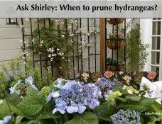 blue-hydrangeas-container-plants-patio-edenmakers-blog