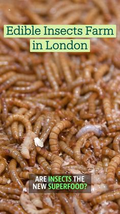 Indian Food Recipes, Diet Recipes, Vegetarian Recipes, Cooking Recipes, Healthy Recipes, Farms In London, Edible Insects, Tastemade Recipes, Taste Made