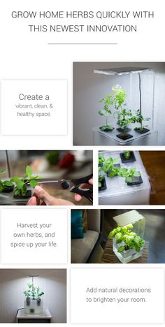 A desktop aeroponics system that grows plants AND your fresh kitchen herbs with fog!