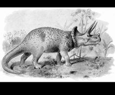 Triceratops by Joseph Smit (1836-1929) from Extinct Monsters 1892 England