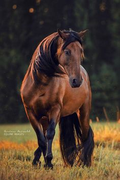 Gorgeous!  Photo Credit: Equine Images