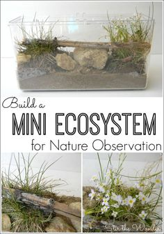 a Mini Ecosystem and allow your kids to safely observe bugs, reptiles and amphibians found in nature!Build a Mini Ecosystem and allow your kids to safely observe bugs, reptiles and amphibians found in nature! Preschool Science, Science For Kids, Life Science, Science And Nature, Earth Science, Science Classroom, Weird Science, Science Fun, Preschool Crafts