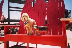 It's Bark in the Park at Turner Field! Share your photos using #BravesPups!
