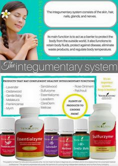 Young Living Essential Oils: Integumentary System ~ Glands Hair Nails Nerves http://yldist.com/ouroilylife